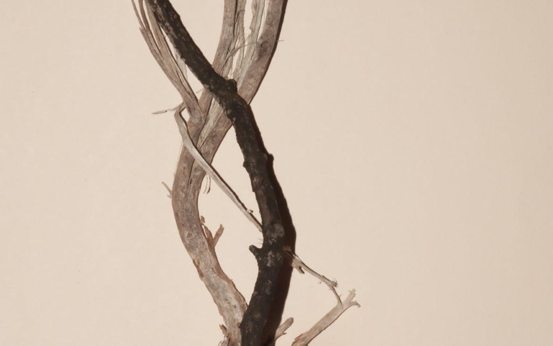 Les petits remèdes naturels : le siwak